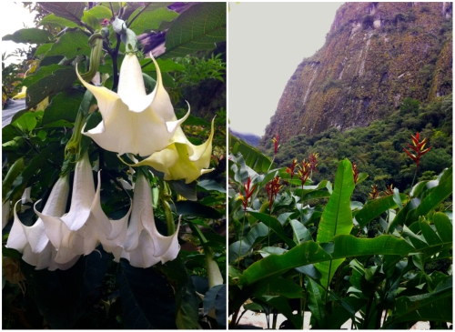 flowers of Aguas Calientes